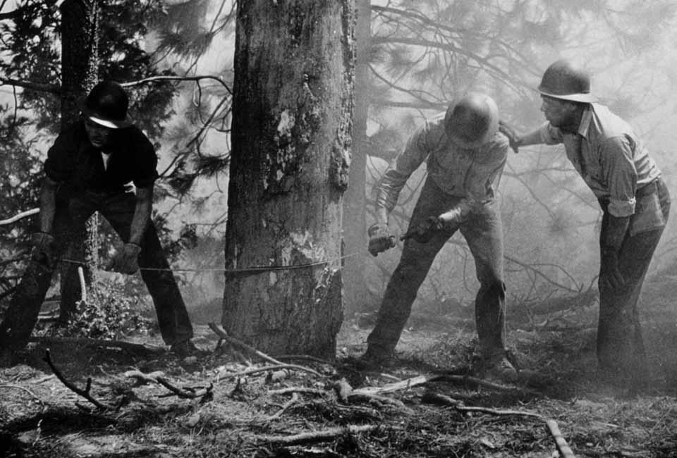 Duello nella foresta