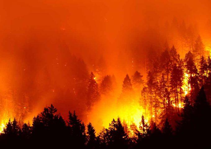 Incendi boschivi raccomandazioni 2019