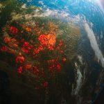 Gli incendi in Amazzonia