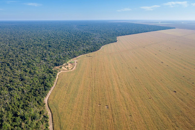 L'agricoltura è una delle cause del disboscamento in Amazzonia
