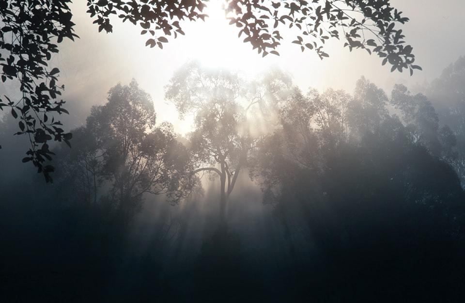 Vegetazione invasa dal fumo, in Indonesia