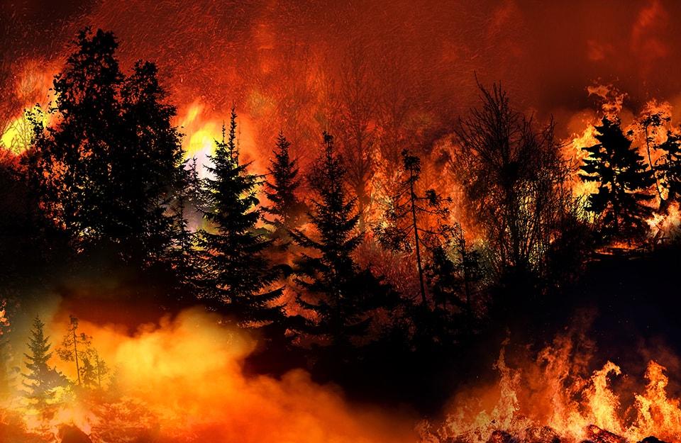 Un bosco della California tra le fiamme